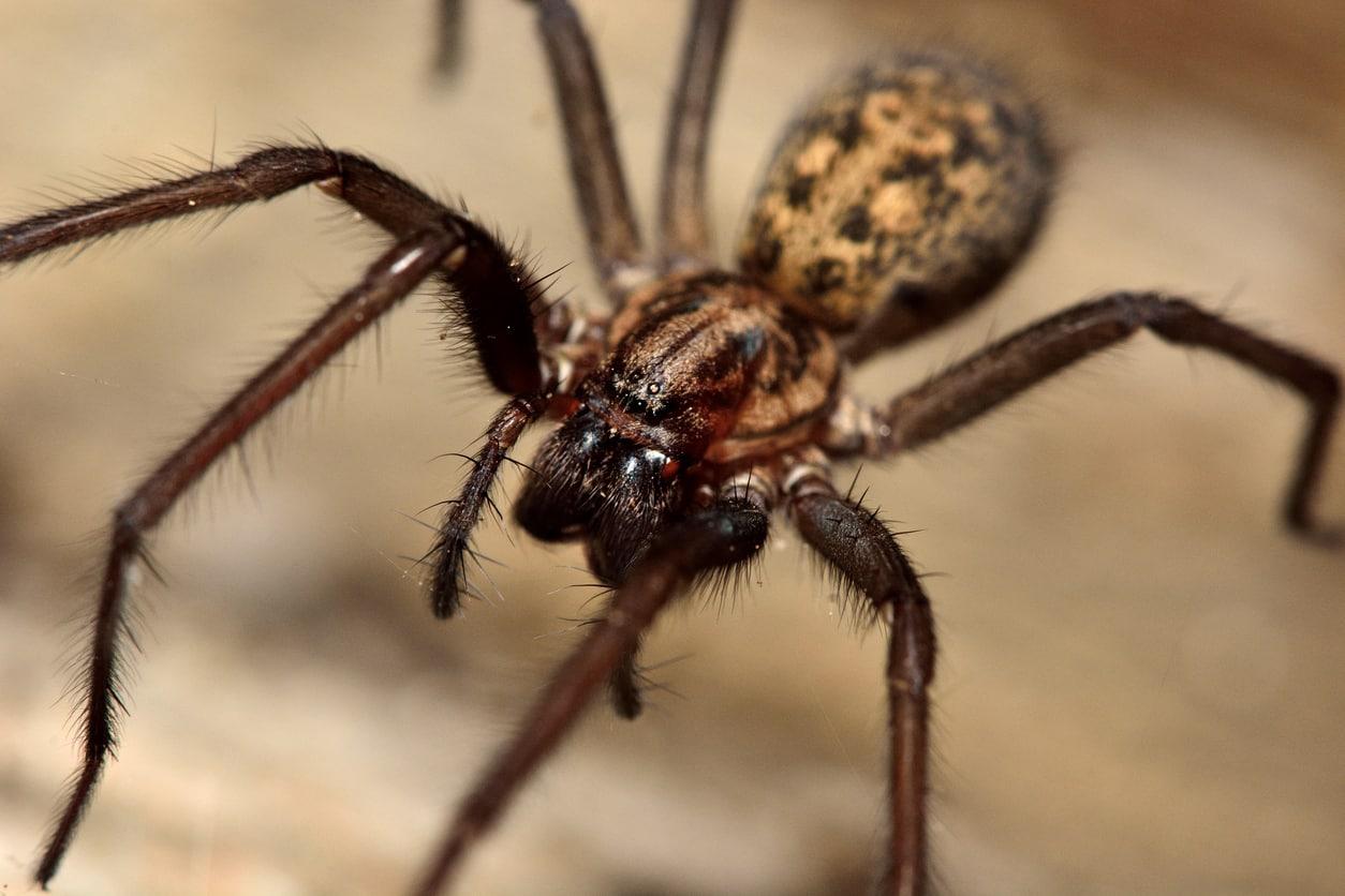 Spinnen bestrijden Almere